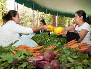 Sábado é dia de comprar frutas, verduras e legumes na Feira de Orgânicos