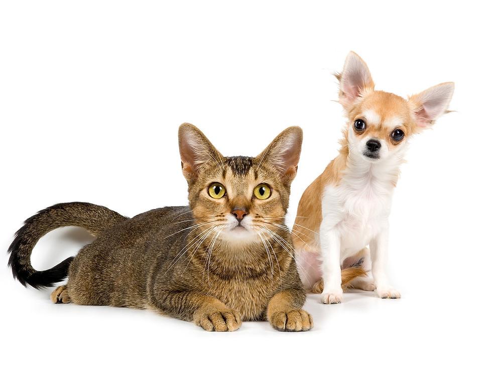gato_e_cachorro.jpg