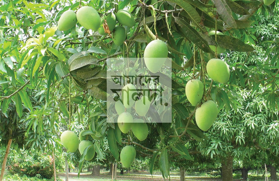 Punishment for stealing mangoes