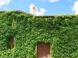 Vines of France