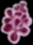 Logo_Hotel_am_Fliederberg_Blüten.png