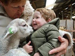 Lammetjes knuffelen