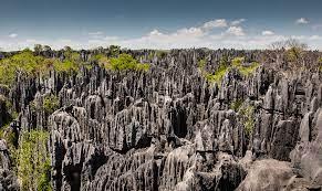 What Makes Madagascar Special?