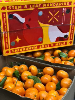 Mandarin Oranges - Taiwan