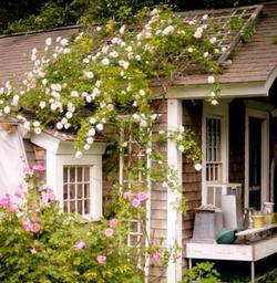 Sue Chessia Floral Designs