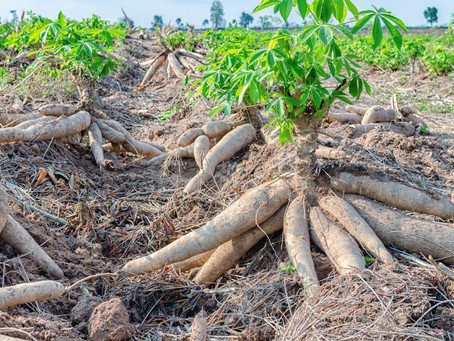 What Kind of Food Grows in Madagascar?