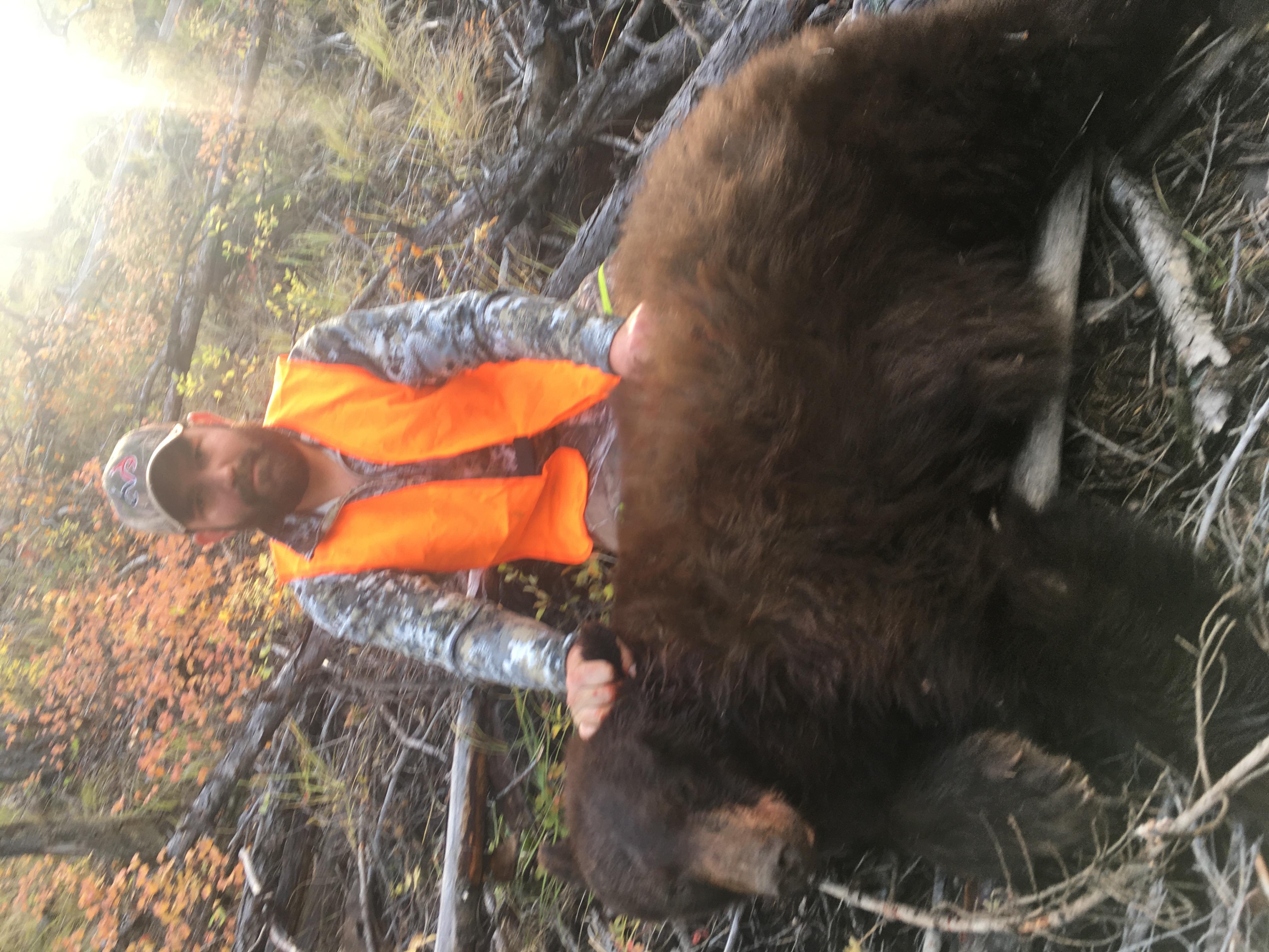 Fall Bear