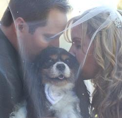palm desert wedding photography desert willow puppy.jpg