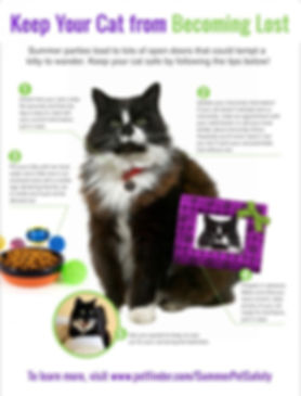 5-tips-to-keep-cat-from-becoming-lost-63