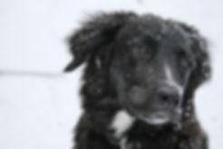 animal-dog-pet-33273.jpg