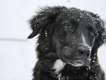All Dogs Aren't Created Equal- Keeping Your Dog Warm & Safe This Winter