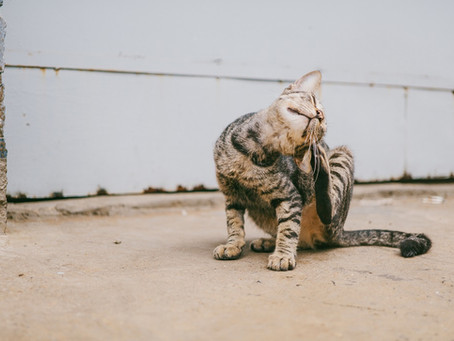 """Leave me alone, fleas! You're """"tick""""ing me off!"""