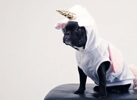 Don't Spook Your Dog on Halloween - Coats and Costumes