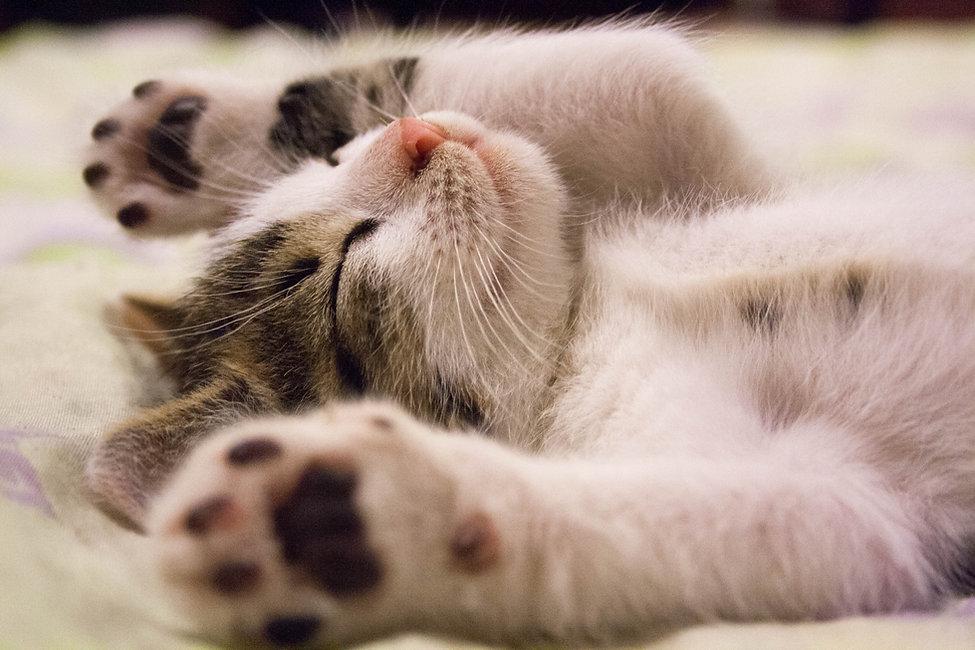 animal-cat-face-close-up-416160.jpg