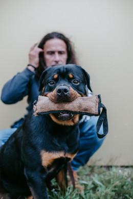 adult-animal-canine-2899098.jpg