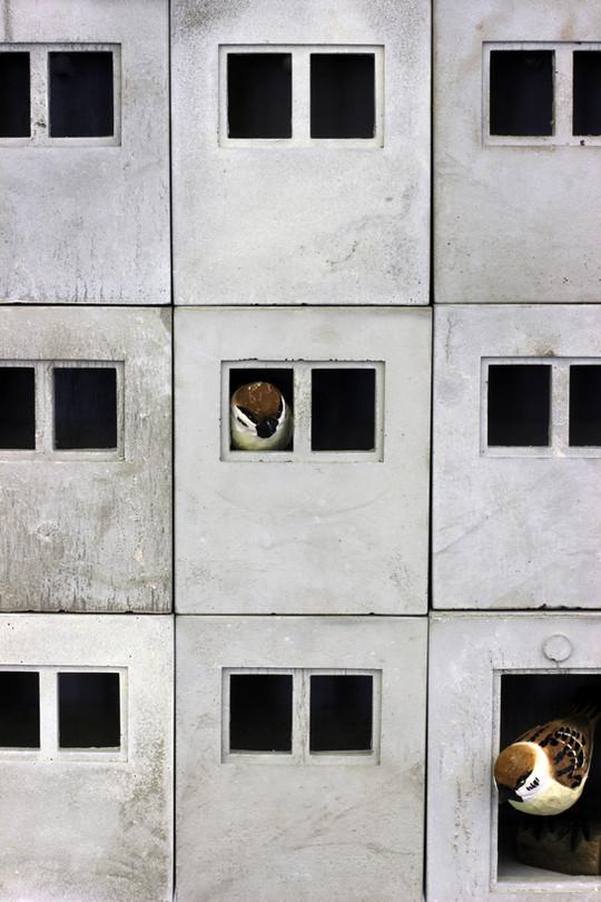 9er forntal closeup sozialspatzenbau.jpg