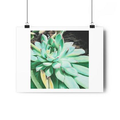 """""""Sunlit Succulent"""" Limited Edition Print"""