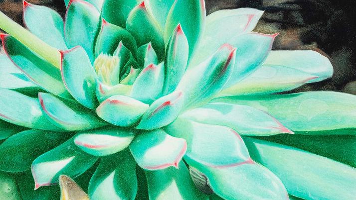 Sunlit Succulent 2019_edited.jpg