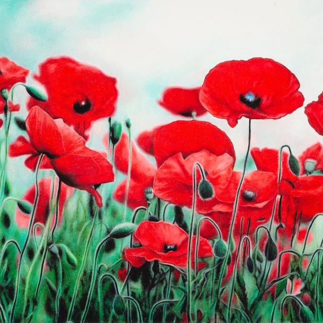 Blushing Poppies