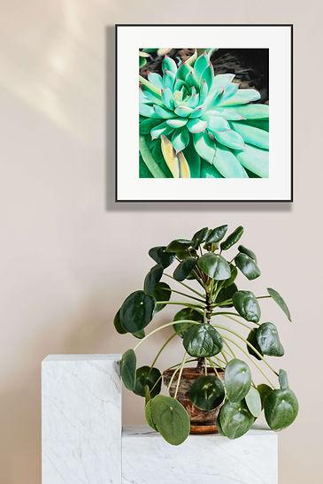 sunlit_succulent.jpg