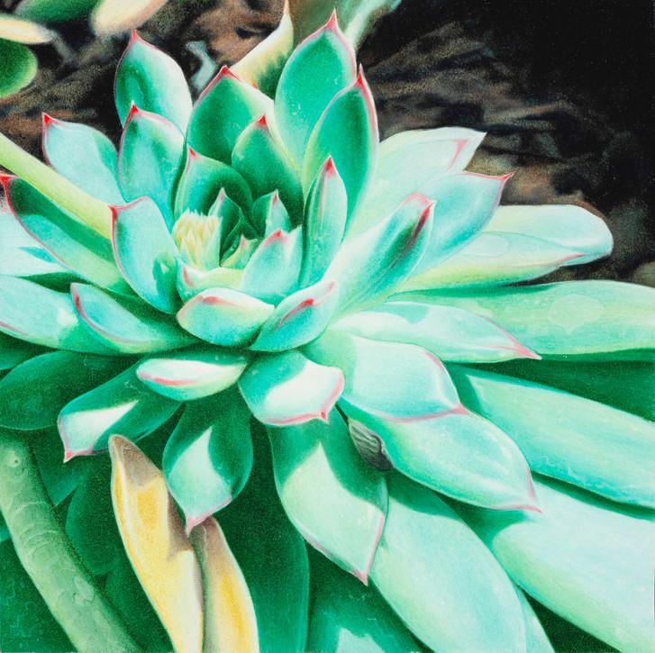 Sunlit Succulent