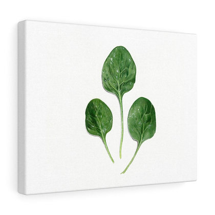 """Spinacia Oleracea {Spinach}"" Limited Edition Canvas Print"