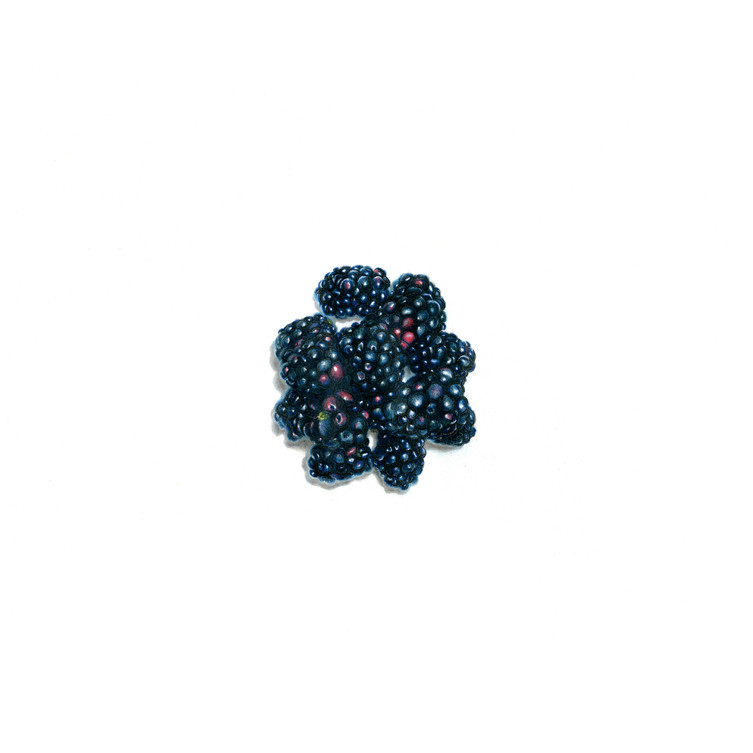 Rubus Fruticosus {Blackberry}