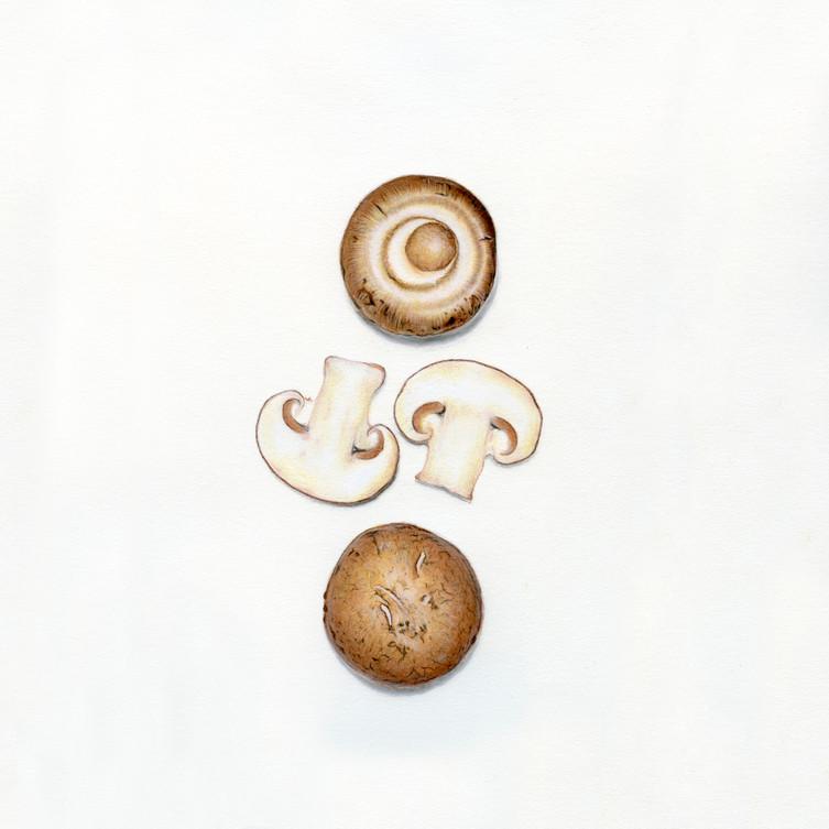 Agaricus Bisporus {White Mushroom}