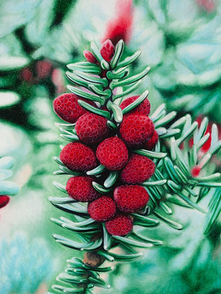 Winter's Rubies