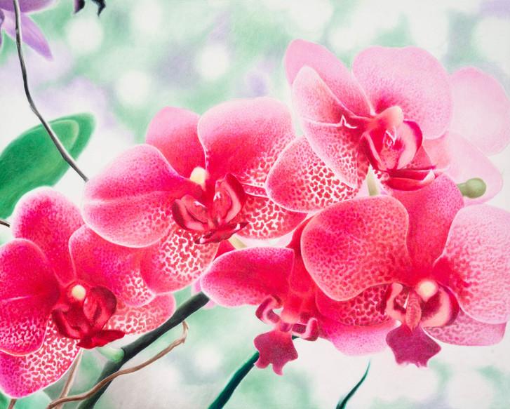 Petals of Serenity