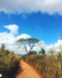 road to bush church.jpg