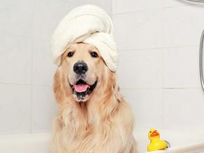 ¿Cómo elegir el shampoo adecuado para mi perro?