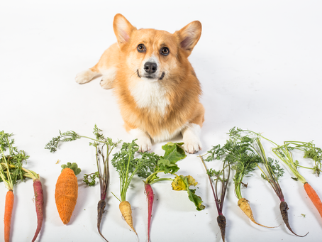 ¡5 nutrientes esenciales para tu mascota!
