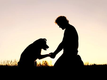 4 tips que te pueden ayudar a afrontar la pérdida de una mascota