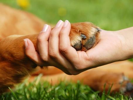 ¡5 tips para mantener las patitas de tu mascota protegidas este verano!