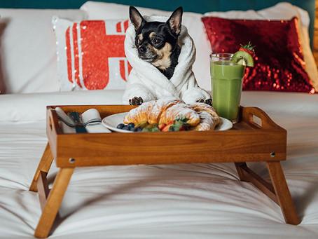 ¡7 hoteles pet friendly para vacacionar junto a tu mascota!