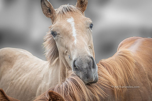 """Horse photograph of at TC Performance Horses in Corryton, Tennessee. Horse art from the """"Land Animals"""" photo collection."""