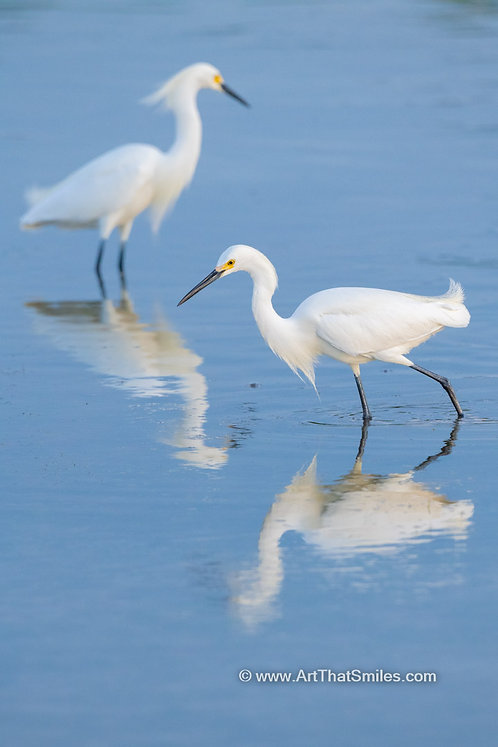 Feathered Reflections
