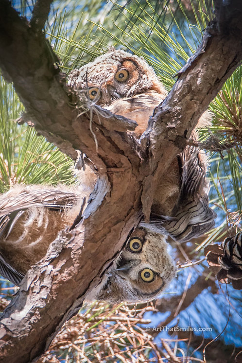Owl See You  (vertical)