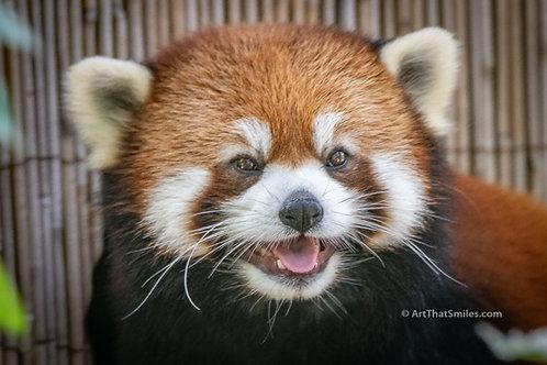 Cuteness Panda-emic