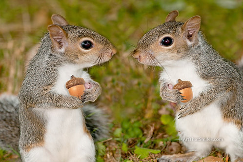 """Photograph of squirrels combined into funny montage. Art from the """"Land Animals"""" photo collection."""