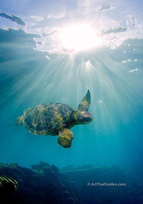 HEAVENLY - beautiful photo of loggerhead sea turtle in heavenly light near Bartholomew Island in the Galapagos.
