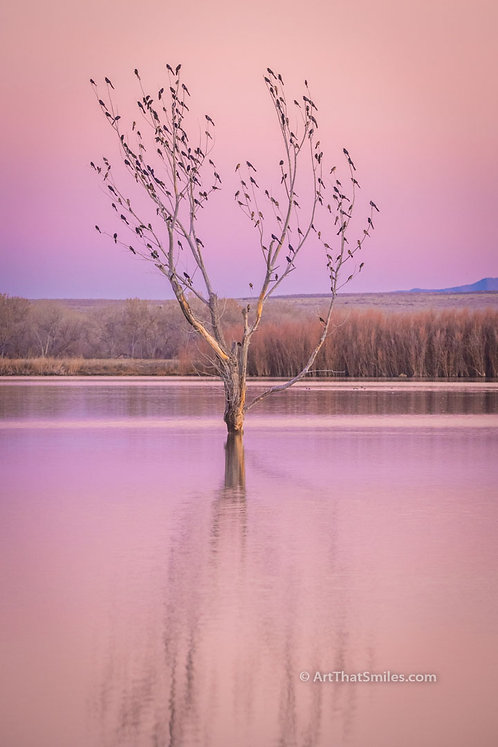 Photograph of blackbirds on a tree at Bosque Del Apache National Wildlife Refuge in San Antonio, New Mexico.