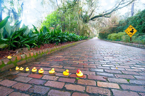 """Duck Crossing"" - A cute photograph of mother ducky leads the ducks and ducklings across the road."
