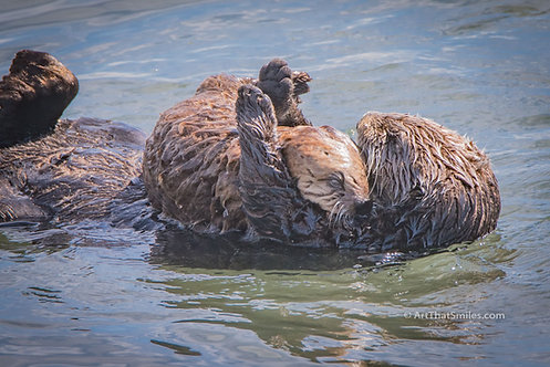 LOVE YOU LIKE NO OTTER - baby and mother sea otter in Morro Bay, California.
