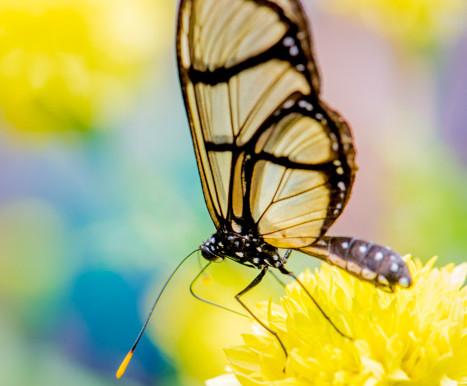 Butterflies in Mindo, Ecuador