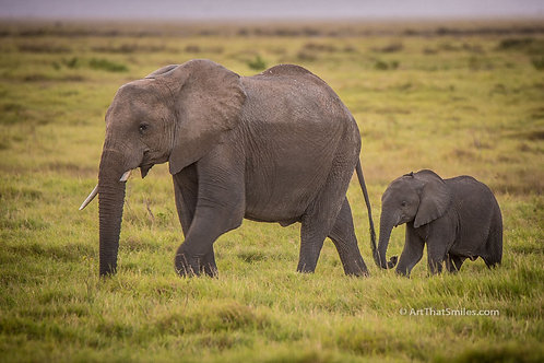 "Parenting photograph of a mother and baby elephant in Amboseli National Park, Kenya. Art from the ""Land Animals"" photo ...."