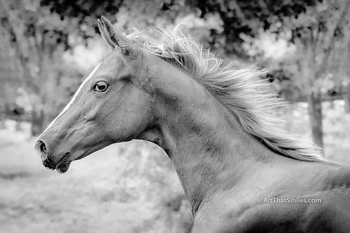 """Beautiful photograph at TC Performance Horses in Corryton, Tennessee. Horse art from the """"Land Animals"""" photo collection."""