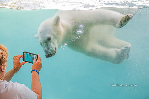 SAY CHEESE - Funny photo of polar bear cub posing for a photograph at the Toledo Zoo in Ohio.