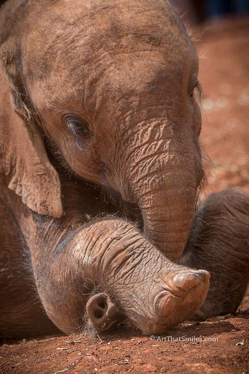 Photograph of a baby elephant at the David Sheldrick Elephant Orphanage in Nairobi National Park, Kenya.